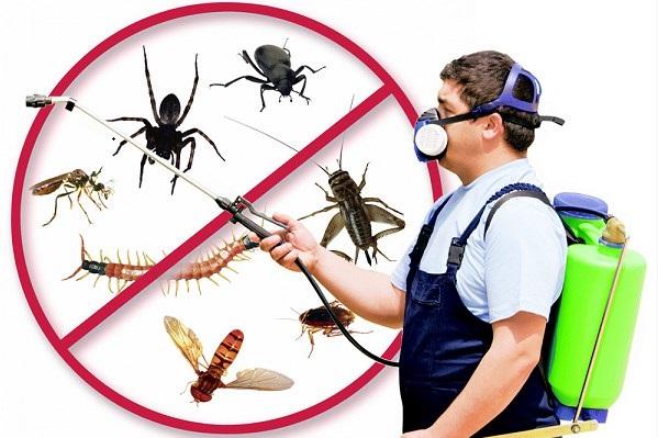شركة اباده الحشرات